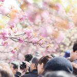 人混みNGな人必見!人が少ないオススメ花見スポットin東京